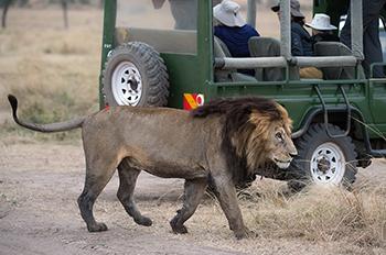Safari Kenia - Mara