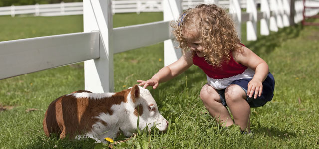 little girl and calf - Donate to VHs to support compassion not cruelty