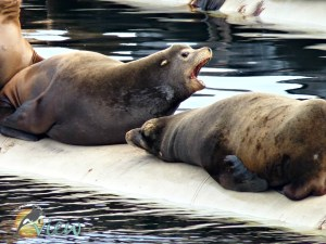 The Best Spot to View Sea Lions on Vancouver Island