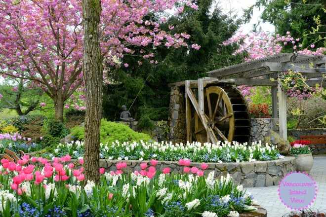 The Butchart Gardens during Spring