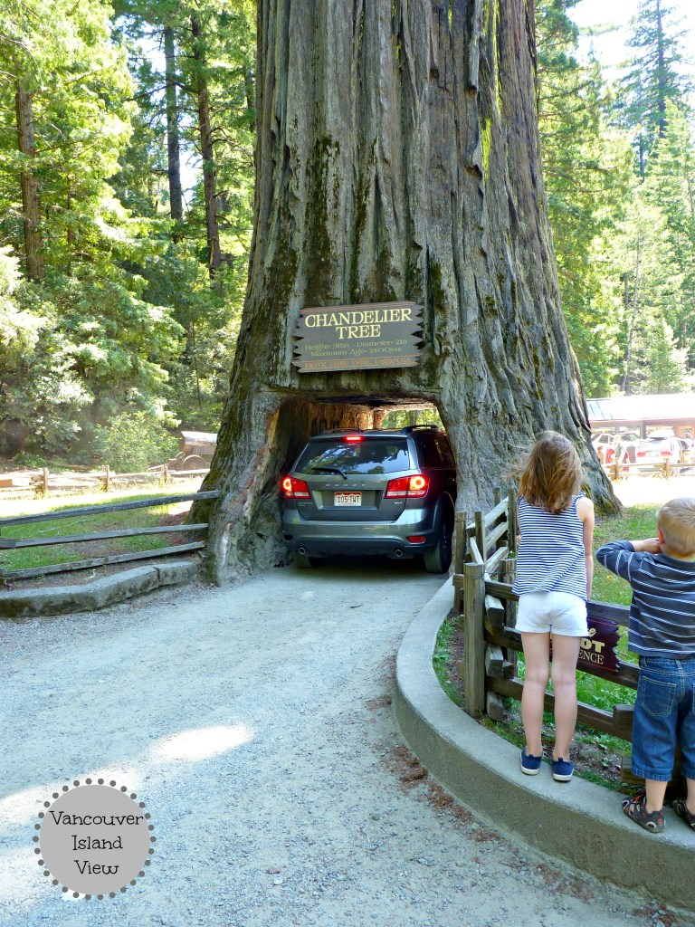 Exploring the Redwood Forest in Norther California is something that should not be missed.