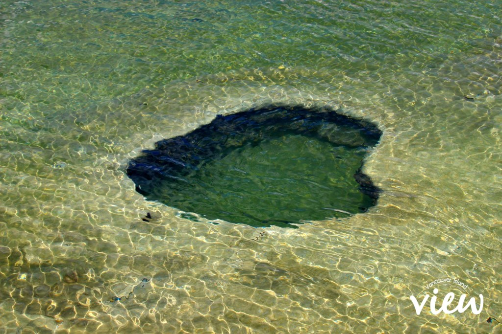 Hot Springs in Yellowstone Lake - Yellowstone National Park highlights, and tips and tricks on making the most of your trip.