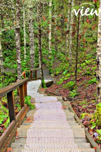 Walking trail - a view from one of the Top 10 Nanaimo walks.