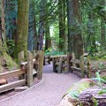 An extensive road trip from Nanaimo to Tofino showcasing the top things to see and do while on route.