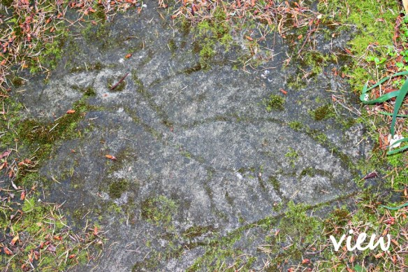 Petroglyph Park carving - one of the many hidden gems found on Vancouver Island.