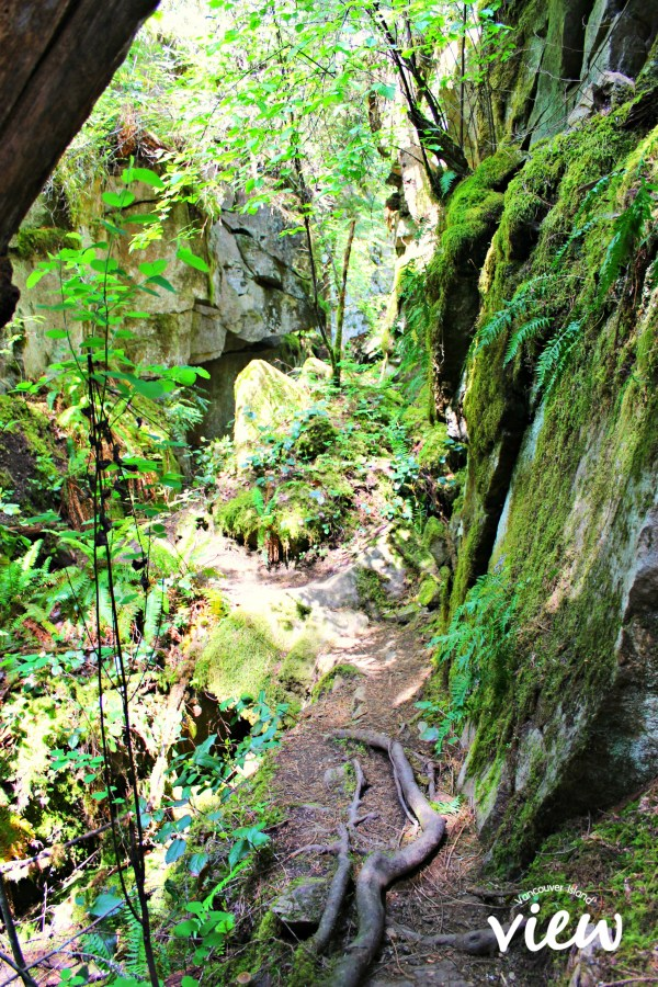 The Dark Side is an epic trail in South Nanaimo one must partake in.