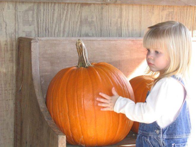 pumpkin-771403_1280