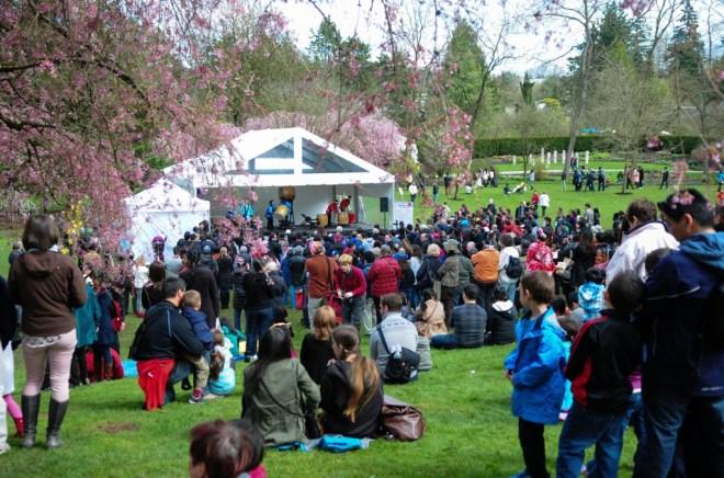 spring family outing - cherry blossom festival