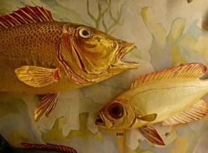 Newsday photo by Thomas A. Ferrara Vanderbilt marine specimens