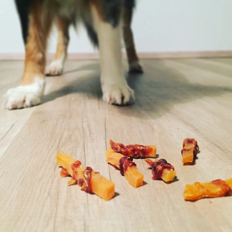 süßkartoffel hund 4yourpet