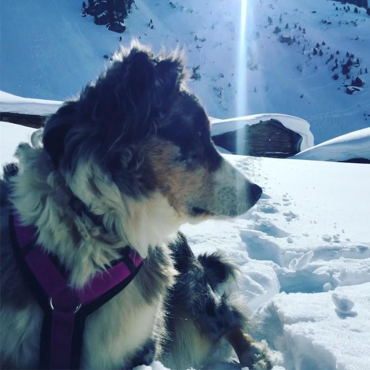 Schneeschuhe Tirol Camping Hund Wintercamping Kelchsau Kitzbüheler Alpen Langer Grund