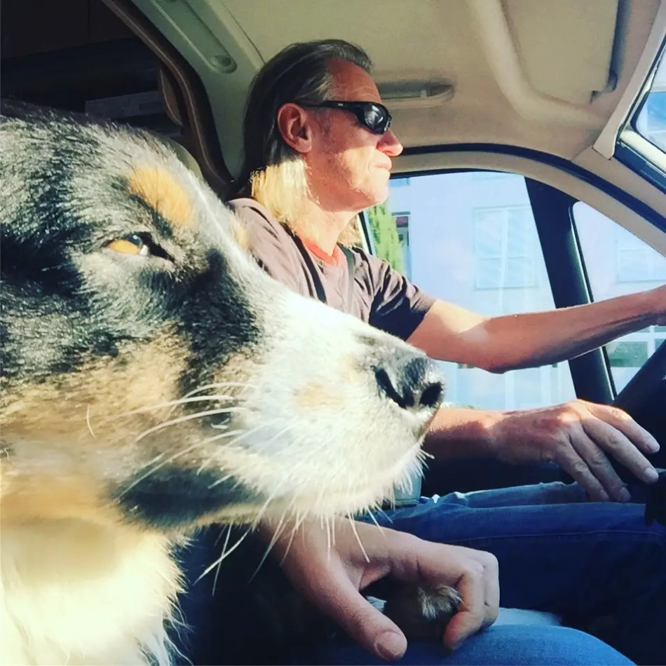 Reisen Hund Camping Kastenwagen Australian Shepherd