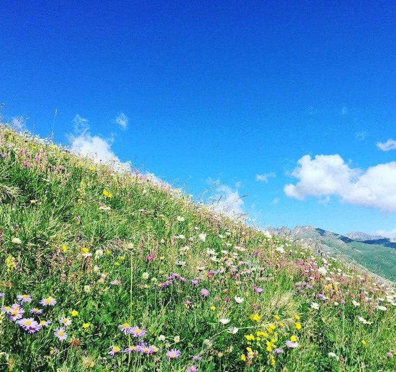 Col du Galibier französische Alpen Pass Frankreich Wandern Wanderung hund Almwiese