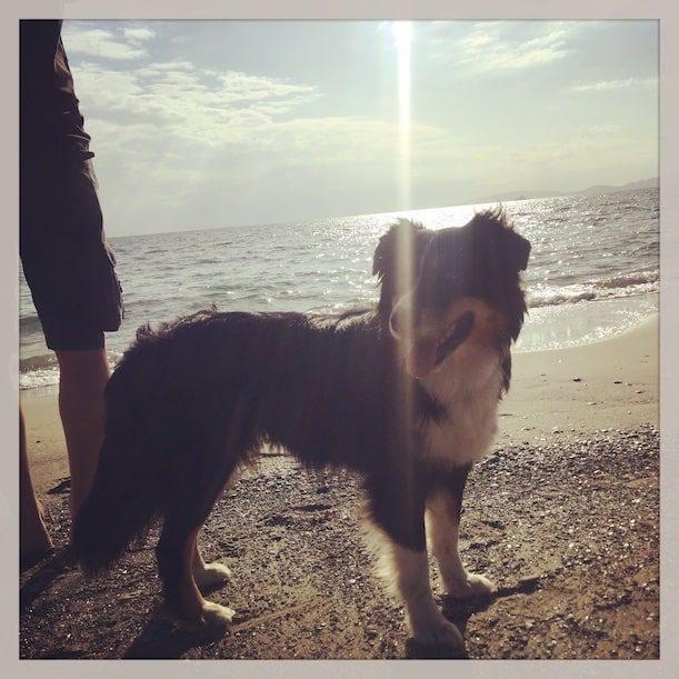 Toskana Hundestrand Wanderung Camping Hund Wohnmobil Italien