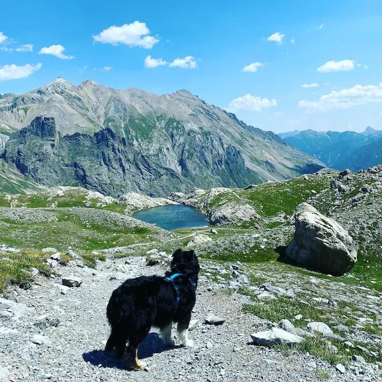 Valle Maira Wandern mit Hund Piemont Sentiero Dino Icardi Cottische Alpen Trekking