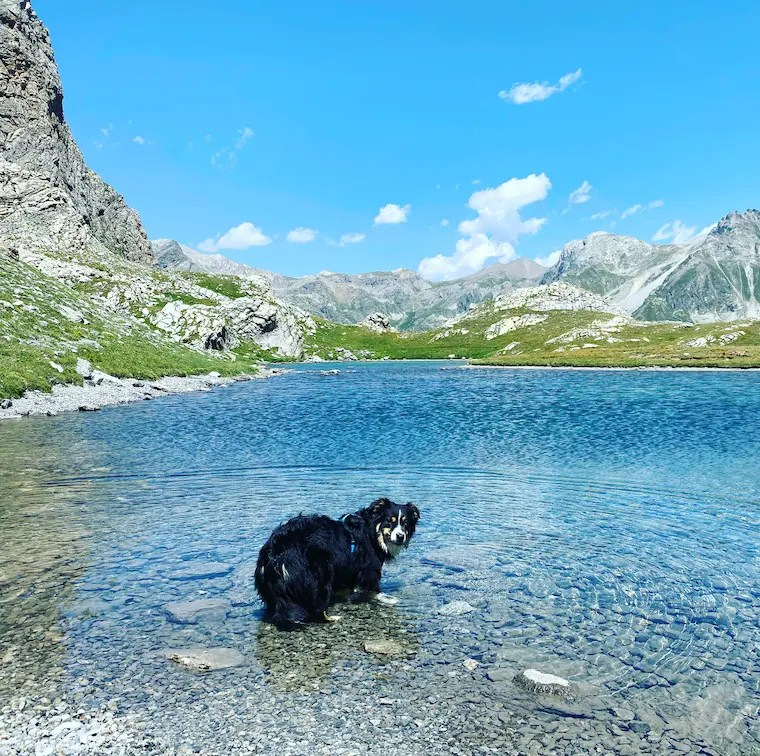 Sentiero Dino Icardi Wandern mit Hund Alpen Piemont Australian Shepherd Lago Niera