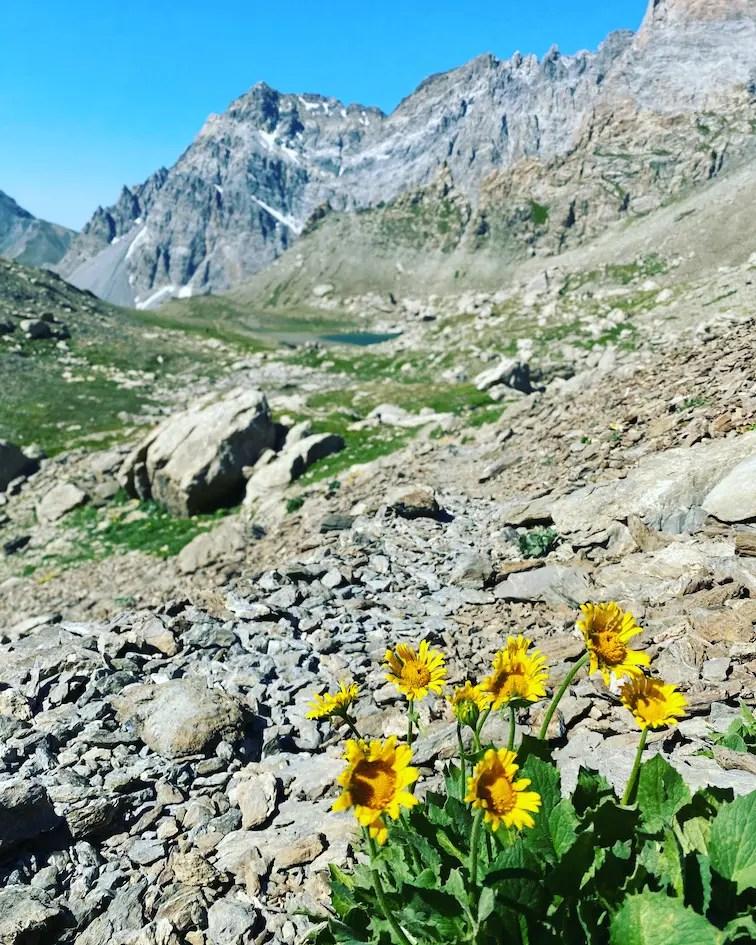 Valle Maira Wandern Almblume unterwegs mit Hund Piemont cottische Alpen