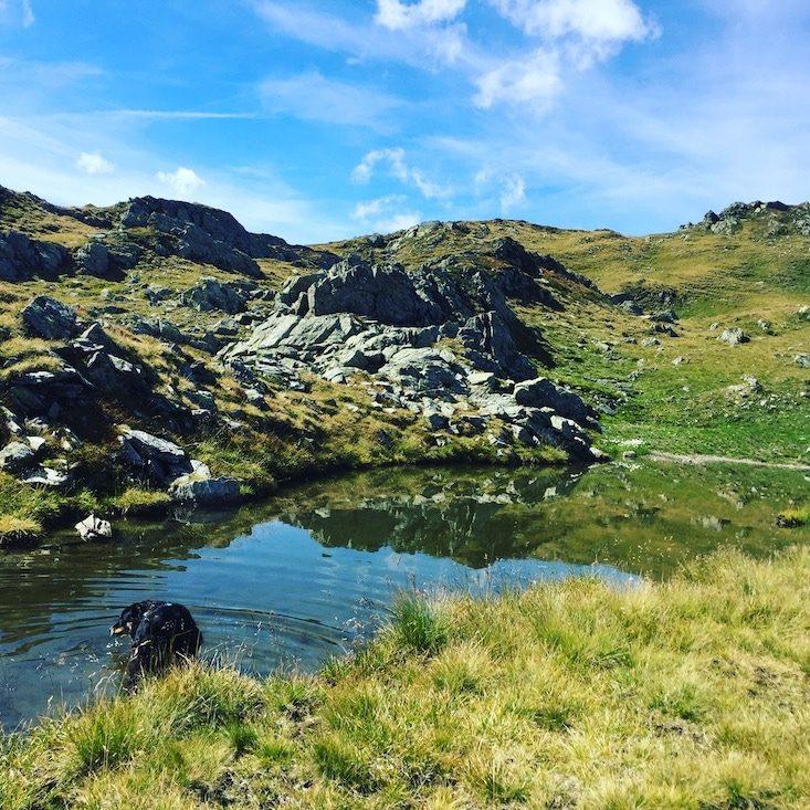 Blaue Lacke Pallspitze Kelchsau Wandern mit Hund Kitzbüheler Alpen Langer Grund Brixental Tirol