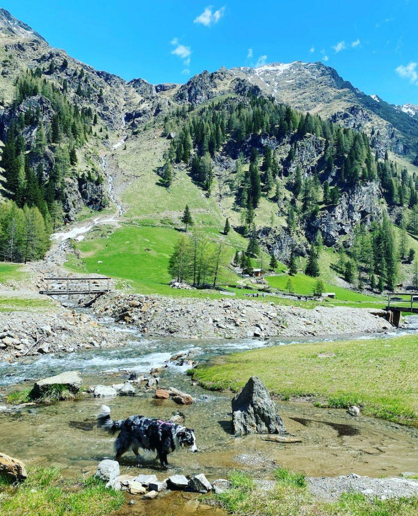 Solo Travel Reisen mit Hund Camping Wandern Osttirol Villgratental Oberstaller Alm