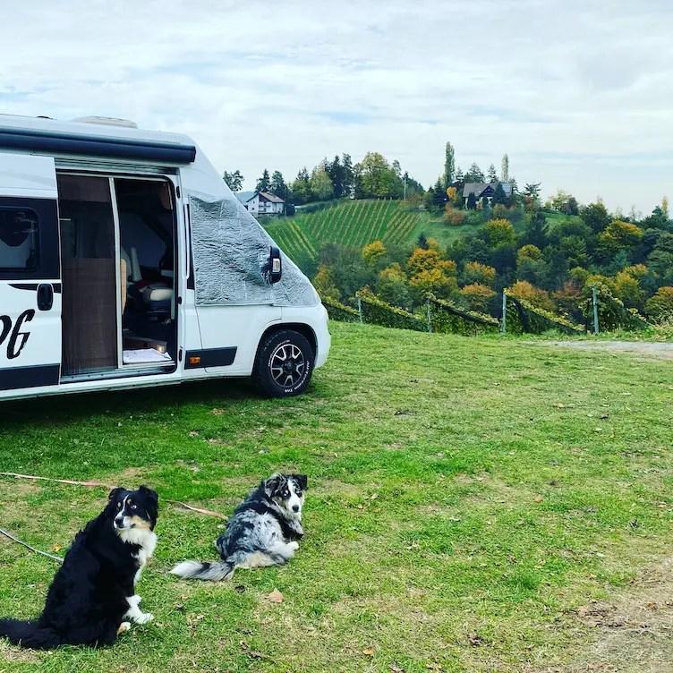 Südsteiermark Kastenwagen Vanlife Hund Weingut Grill Herbst Wohnmobil reise Österreich Australian Shepherd