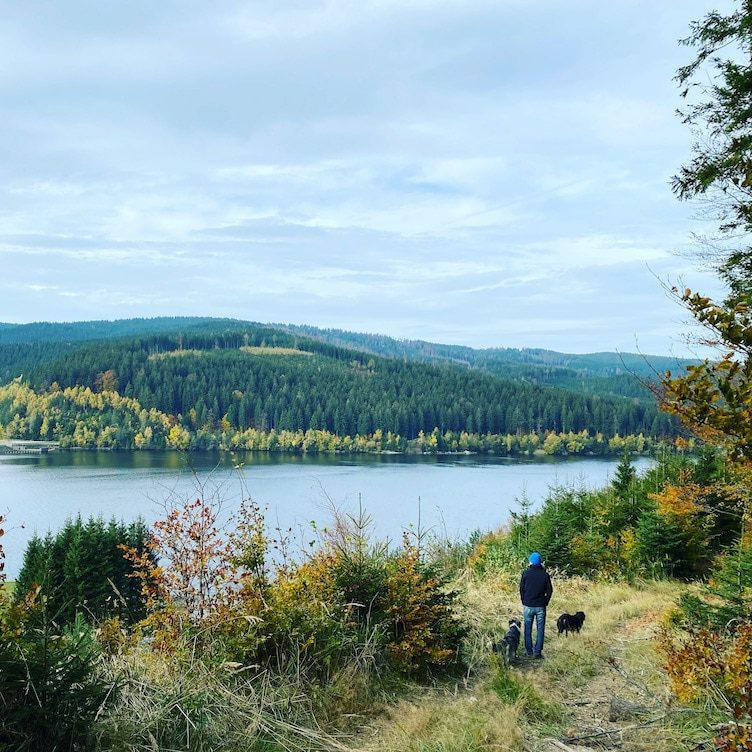 Steiermark Kärnten Soboth Stausee Wandern mit Hund Österreich