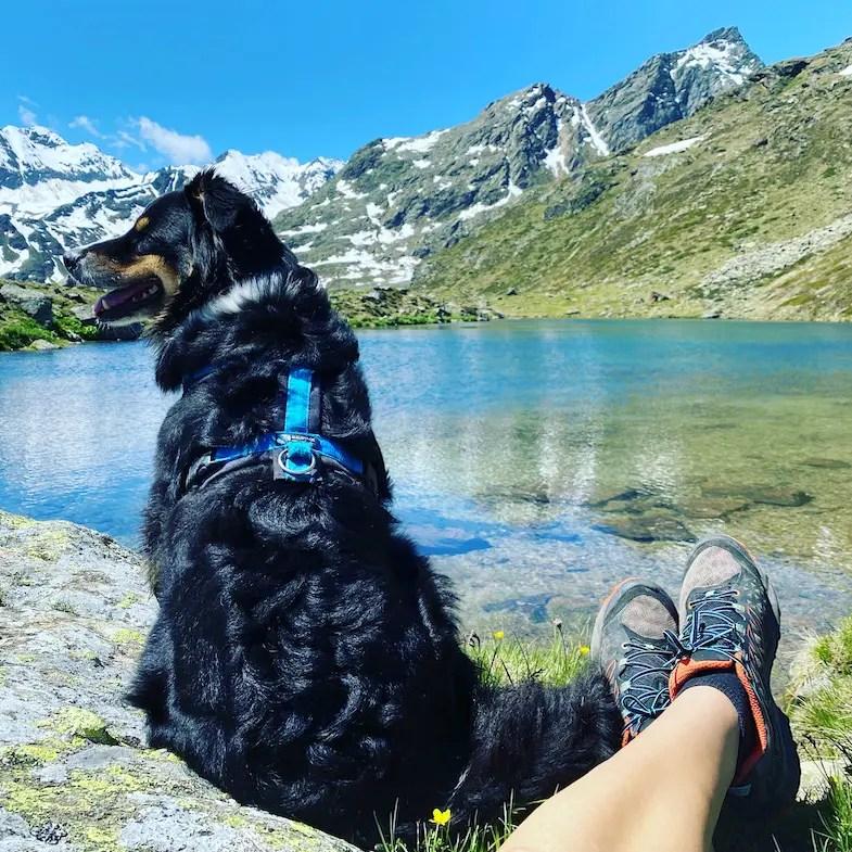 Reisen in Zeiten von Corona Wandern mit Hund Alpen Kaunertal Australian Shepherd