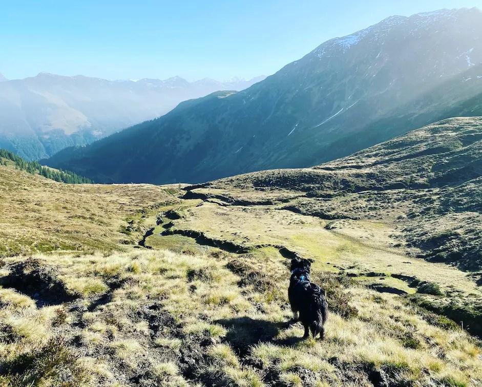 Kitzbüheler Alpen Lodron Windau Wandern mit Hund Grasberg Australian Shepherd Wanderung Herbst