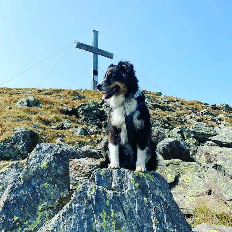 Torhelm Gipfel Wandern mit Hund Wanderung Brixental Torhelm Kelchsau Langer Grund Grasberge