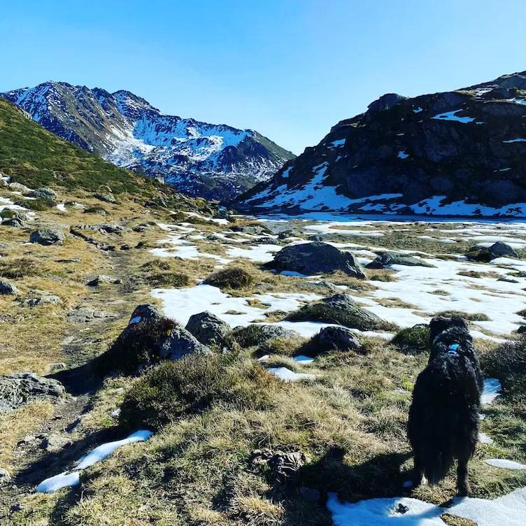 Kitzbüheler Alpen Wandern mit Hund Kelchsau Kurzer Grund Schafsiedel Wildalmseen Australian Shepherd Herbst Brixental