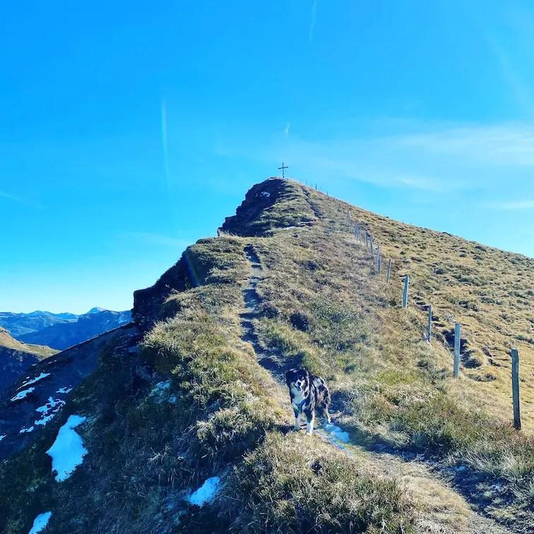 Wandern Wanderung mit Hund Tirol Jochberg Kitzbühel Grasberg Herbst