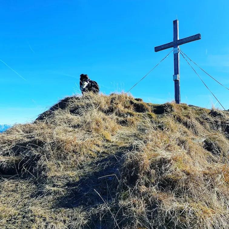 Kitzbüheler Alpen Grasberge Wandern mit Hund Schützkogel Jochberg Australian Shepherd Tirol