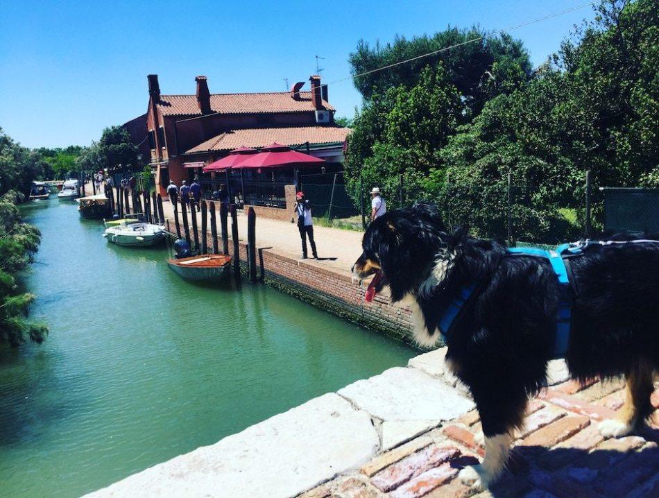 Laguna Nord Torcello Lagune von Venedig Venezianische Insel mit Hund Australian Shepherd