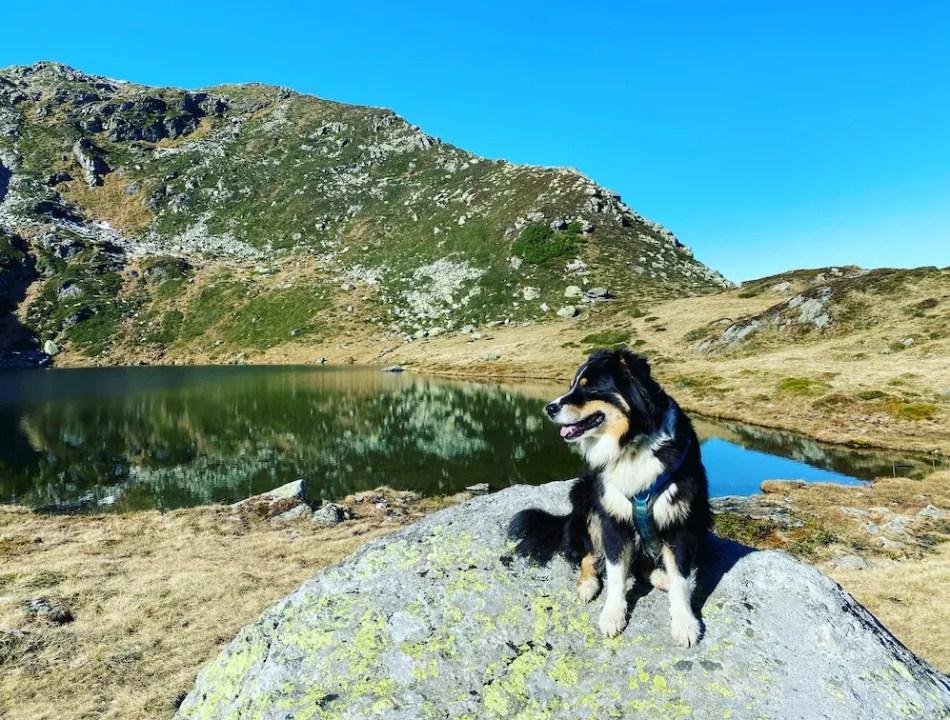 Mittlerer Wildalmsee Wandern mit Hund Australian Shepherd Tirol Kelchsee Brixental Kurzer Grund Schafsiedel Herbst