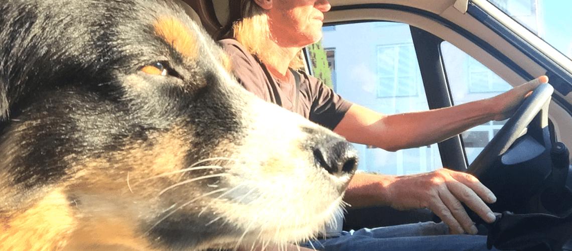 Packliste Camping mit Hund Vanlife Urlaub