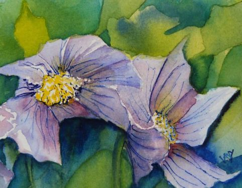 Anemone Pair (watercolour 10 x 15 cm) Artist: Vandy Massey