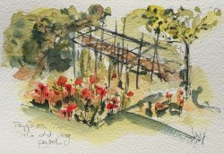 Poppies in the old vegetable patch - painting Paxos watercolours