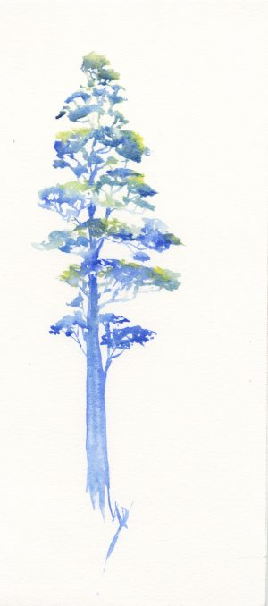 August Tree watercolour giveaway. King of the Forest. Watercolour