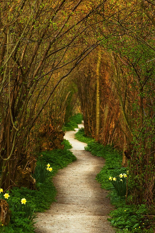 Forest Path, Leiden, The Netherlands