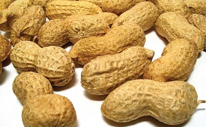 The National President, National Groundnut Producers Processors and Marketers Association of Nigeria, Aimu Foni, yesterday, warned members to be wary of impostors who want to conduct elections.