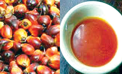 Palm oil producers cry out over price slide due to illegal import