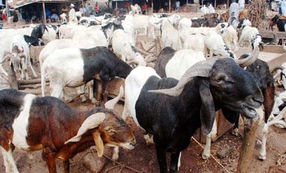 Ram market in Epe
