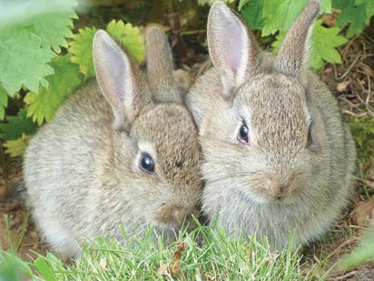 25,000 liters of urine from over 5,000 rabbits to serve as organic fertilizer — NALDA