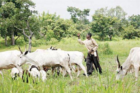 Herdsman kills farmer who catapulted him