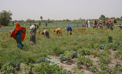 Agriculture, youth, Africa