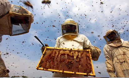 200 youths trained on beekeeping at Edo Agric Cluster