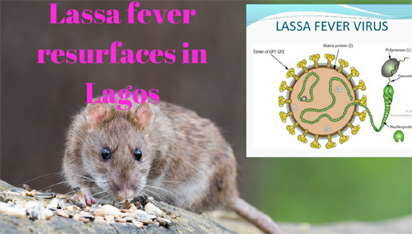 LASSA FEVER spreads as Kogi, Delta, record deaths