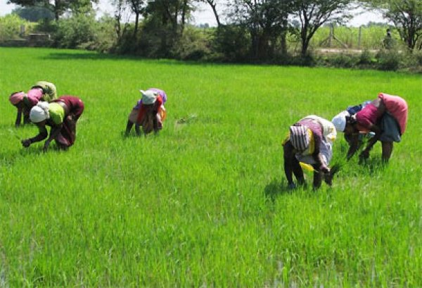 Food Security: NALDA moves to reactivate 1,200 hectares farmland in Ekiti