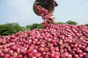 Nigeria can generate N151bn from onion farming annually —Group
