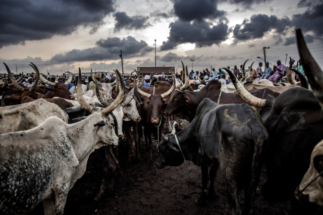 Herders, farmers crises linked to climate change — CAN, Sultan