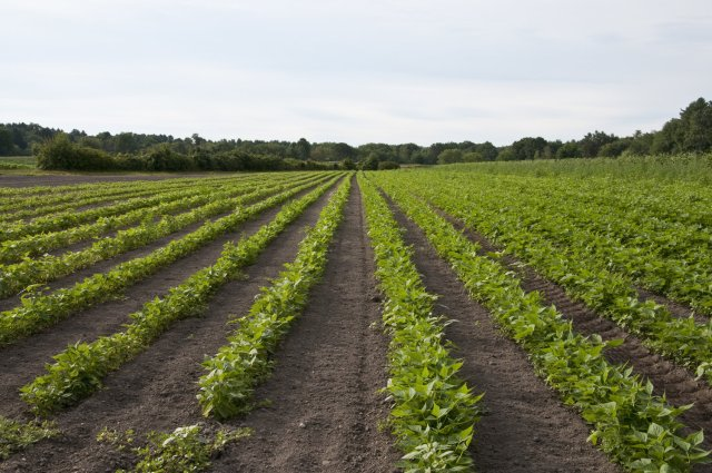 Agric Devt: FG moves to employ 75,000 agric extension workers